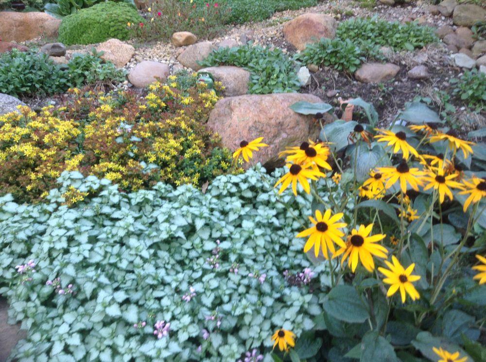 Сад почвопокровные цветы фото